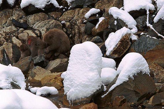 Sorprendentes Animales Camuflados En La Naturaleza