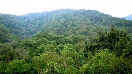 Marcha Por Defensa De Bosque Panul Se Desarrollara Este Sabado Cooperativa Cl