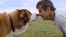 "¿Dog Lover? Revisa el emotivo primer tráiler de ""A Dog's Purpose"""