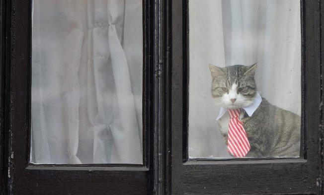 Fotos El Gato De Julian Assange Se Roba Las Miradas