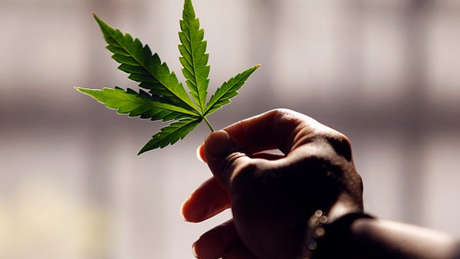Image result for legalizó el uso medicinal de la marihuana