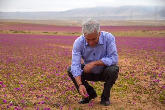 Avionetas aterrizaron sobre el desierto florido — Increíble denuncia