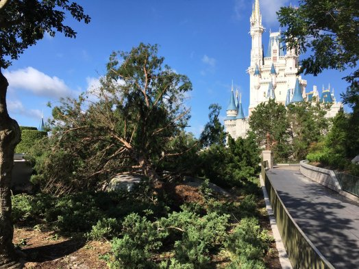 El huracán Irma dejó destrozos en los parques de Disney de Florida y recién reabrieron sus puertas este martes. Visitantes compartieron los daños registrados en Magic Kingdom Park, Epcot, Animal Kingdom y Hollywood Studios.