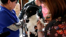 El candidato considera necesarios estos hospitales para la atención de las mascotas.
