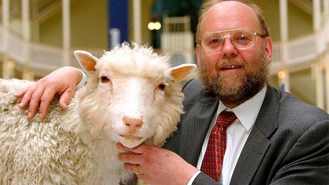 Resultado de imagen para Fotos de la oveja Dolly