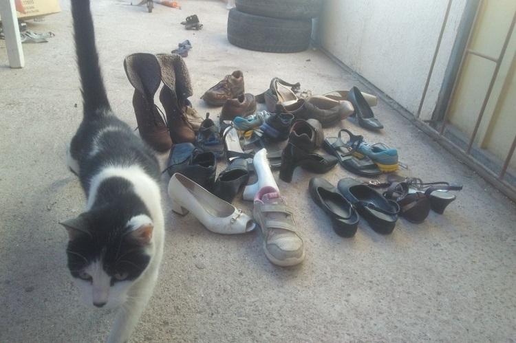 7874d658 Curiosa de al Calama Le llevan en costumbre unos gatitos zapatos rr5nCpqw