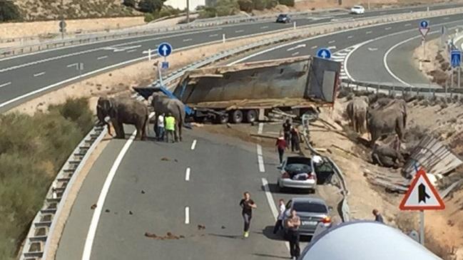 Muere un elefante tras volcar un camión de circo en España
