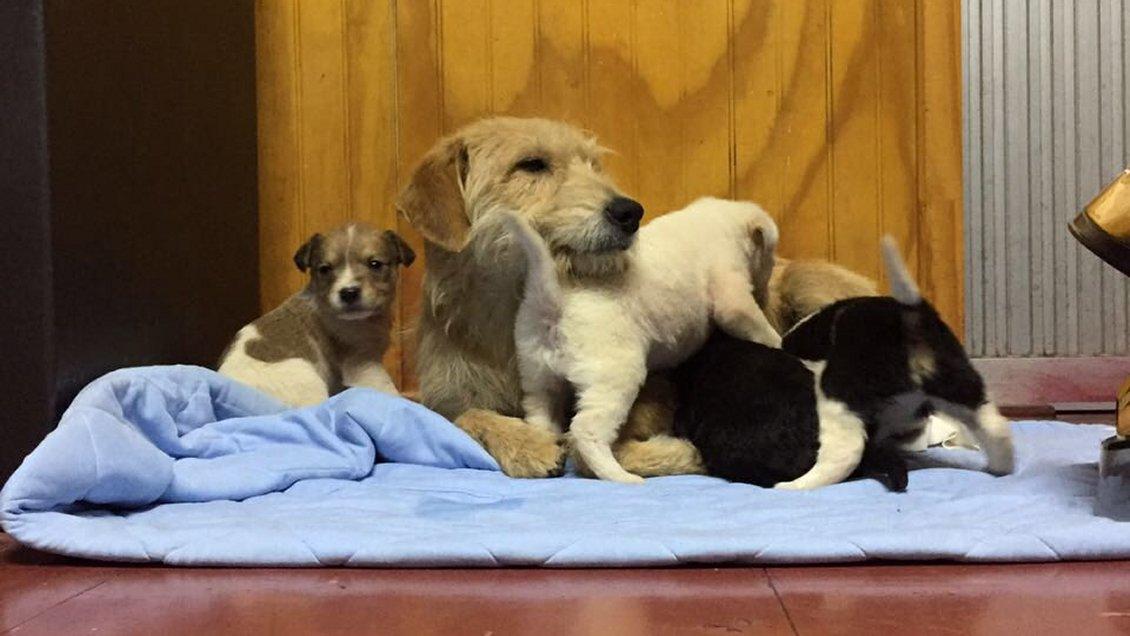 Bomberos logró sacrificado y largo rescate de cinco cachorros y su madre en Talcahuano