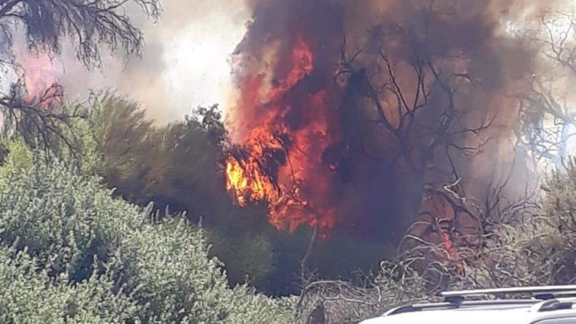 Incendio de pastizales movilizó a todo el cuerpo de bomberos de Copiapó