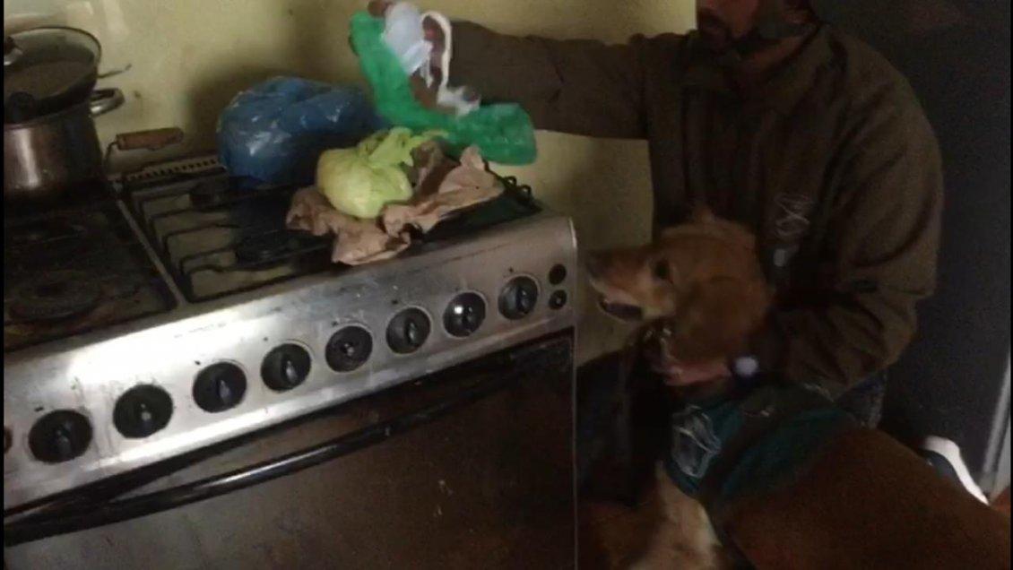 OS7 de Valparaíso incauta 44 mil dosis de distintas drogas y detiene a ocho personas tras allanamiento