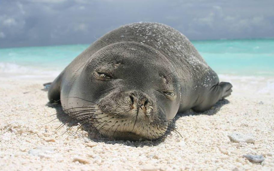 ¿Qué tiene esta foca en la nariz?