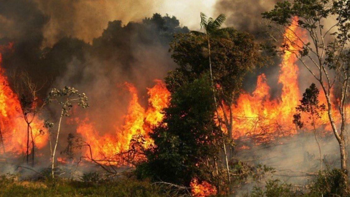 Chile ofrece ayuda a Brasil y Bolivia para combatir incendios en la Amazonía