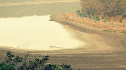 Plantaciones forestales han alterado el ciclo de nitrógeno en la costa de Chile más que el cambio climático