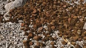 Sernapesca incautó 2.000 kilos de erizo en Calbuco – Noticias Chile