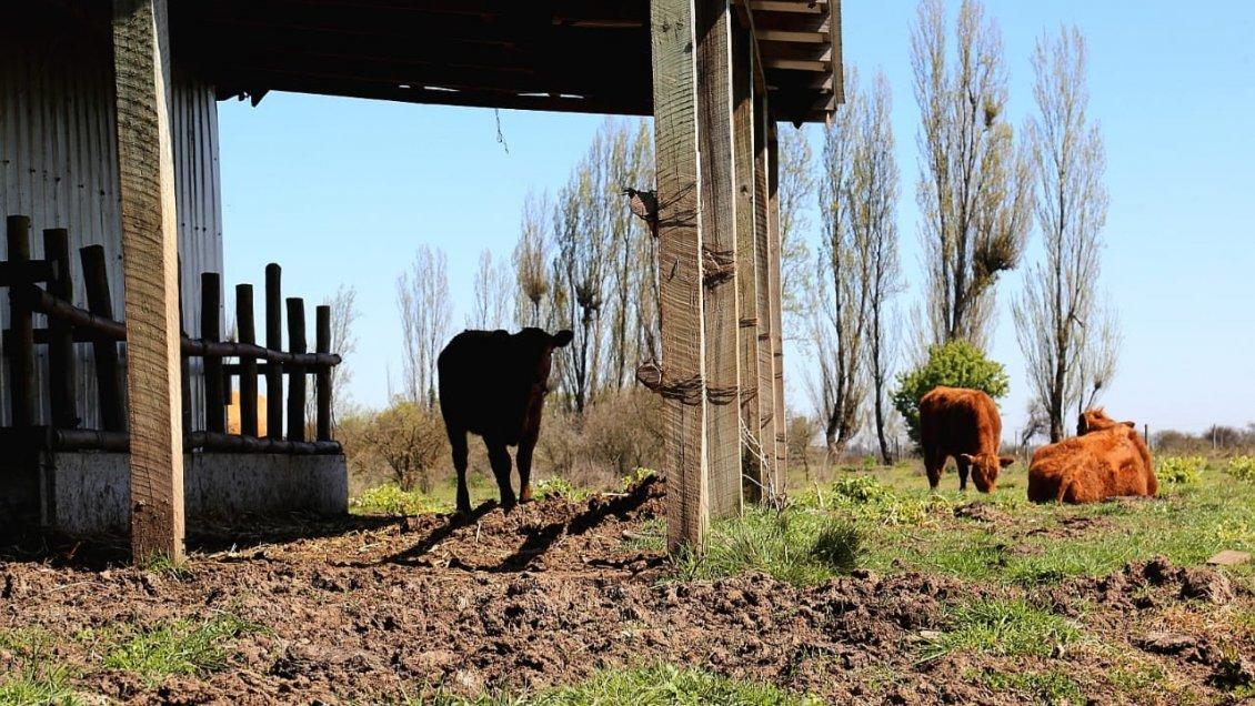 Maule: 62 pequeños ganaderos participan en alianza productiva para enfrentar el cambio climático