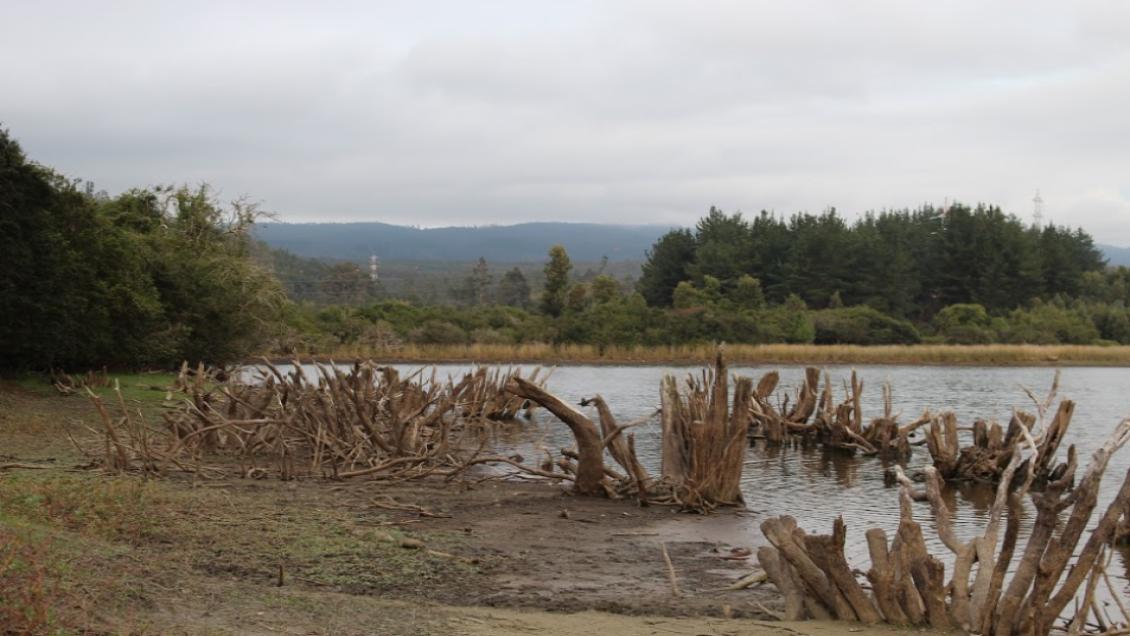 Laguna Quiñenco de Coronel presenta dramática disminución de su caudal