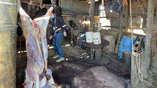 Detectan insalubre matadero clandestino en Quilpué: Hombre que faenaba a un chancho fue detenido
